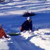 Sledding at the vacation house...Zia is more interested in eating the snow!