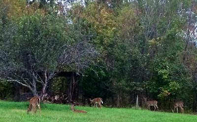2013 10-19 The Jarvis's Deer Ranch