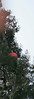 Redwood-2894