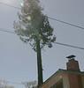 Redwood-2883