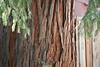 Redwood-2904