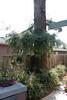Redwood-2905