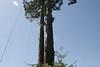 Redwood-2899