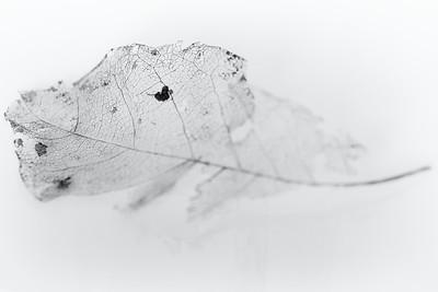 Leaf viens