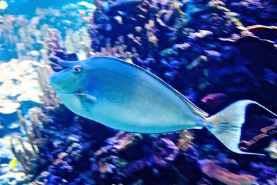 2013 Maui Aquarium