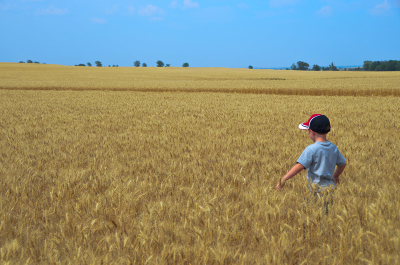 BRAYDEN WALKING IN THE WHEAT.-- LOOKING FOR A LOAF OF BREAD?