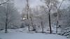 Dawn after snow, Lexington MA