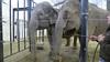 Hope Elephants, Hope ME