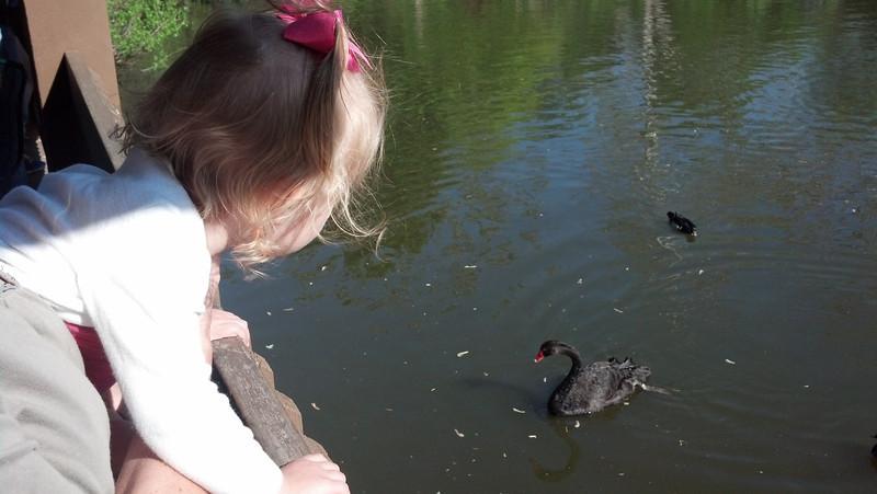 Watchin' the black swan.