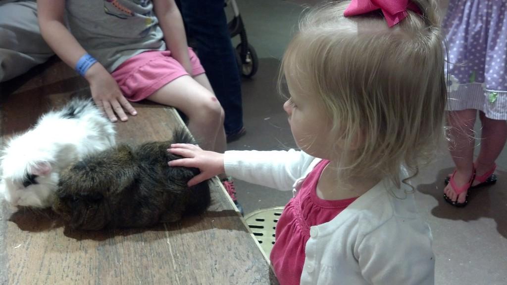 Pettin' the Guinea Pig.