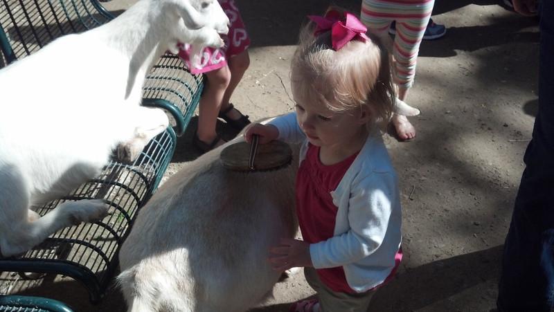 Brushin' the goat.