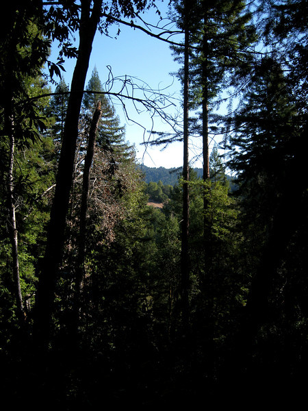 """The only """"vista"""" on the hike.  The redwoods surrounding the trail are too tall to afford any views!"""