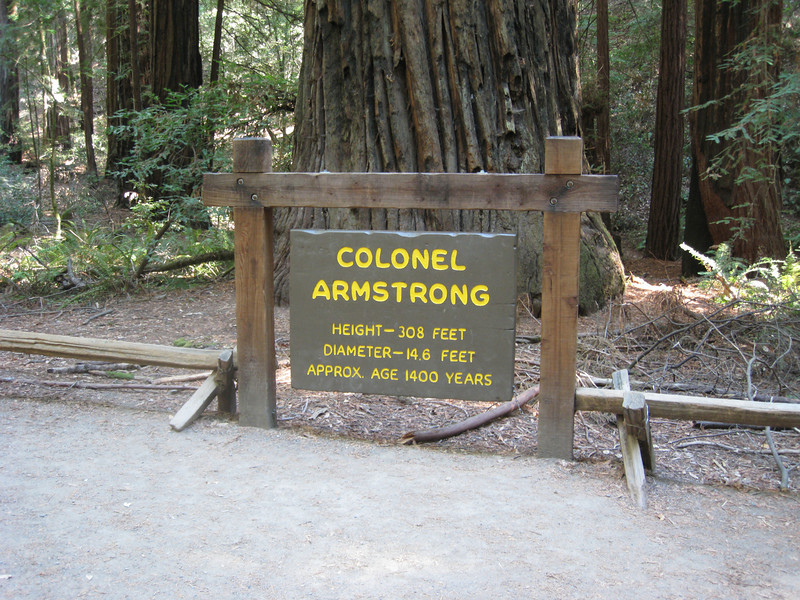 Oldest Tree in Armstrong Park - the Colonel Armstrong.