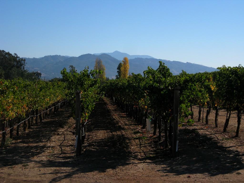 Beautiful California at the Coppola Winery.