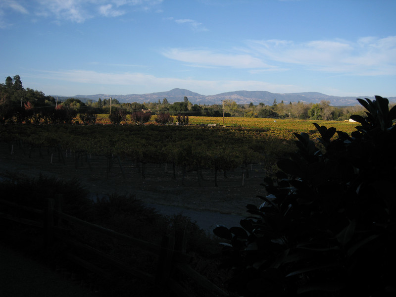 View from the front of Mill Creek Winery's tasting room.