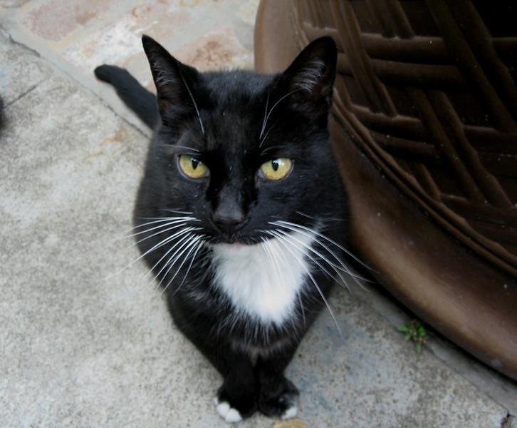 Haydon the extremely friendly cat, namesake of the Haydon Street Inn, the B&B where we stayed in Healdsburg.