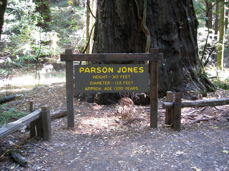 Tallest tree in Armstrong Park - Parson Jones, a whole 2 feet taller than the Colonel Armstrong Tree.
