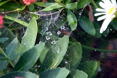 9/27 - Spider Webs