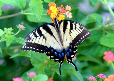 8/24 - Butterfly at the Consignment Sale