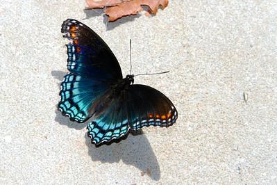 9/12 - Butterfly in Garage