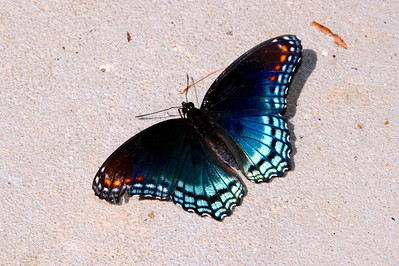 Butterfly on the garage floor