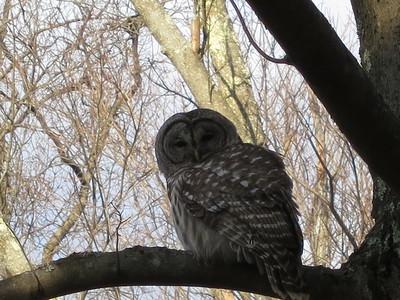 20130201 Owl