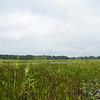 Tidal freshwater marsh w/ wild rice (Zizania aquatica)