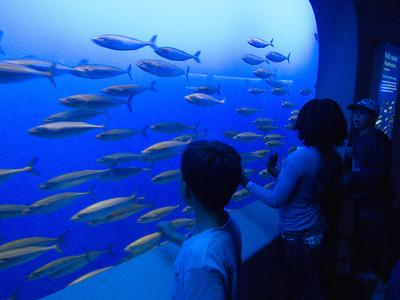 Monterey Bay Aquarium 8-2013