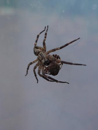 Spider 2013