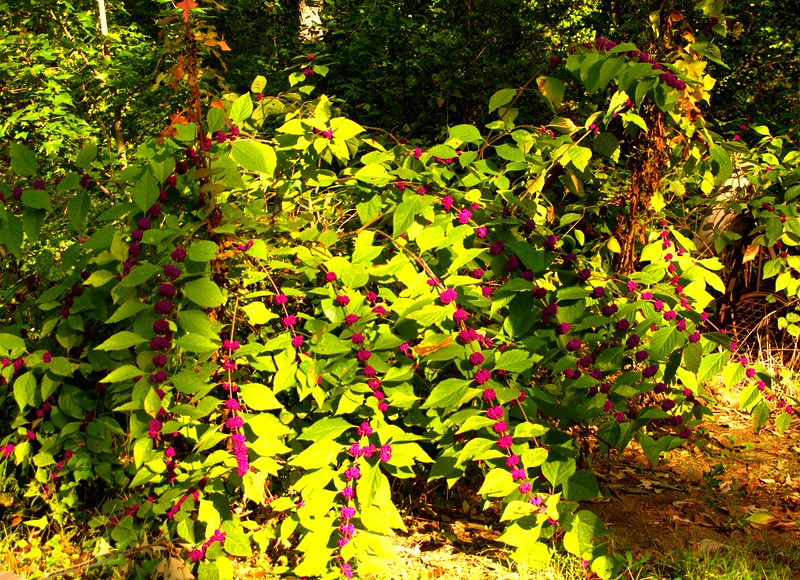 2014-10-19-Edom-Festival-Wood-Cabins 059 -1adjustedBestof2014