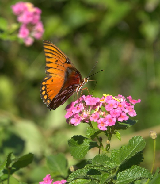 2014-10-19-Edom-Festival-Wood-Cabins 170 -1adjustedBestof2014