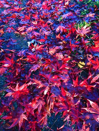 Fall leaves - November