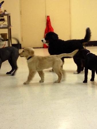 Puppy Zumba Class
