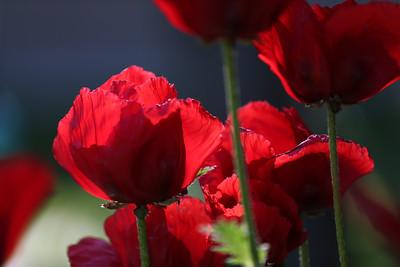 2014-05-24 flowers