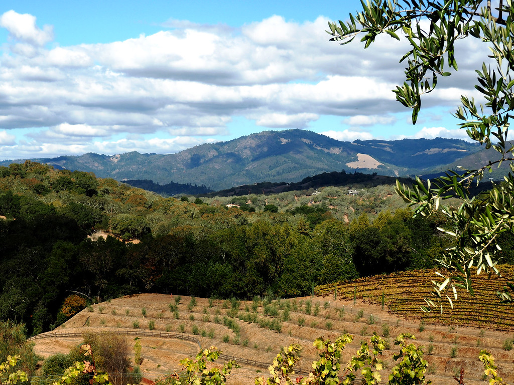 Not only is Benziger biodynamic and make good wine, but the scenery is pretty terrific, too!