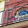 Parade spectator