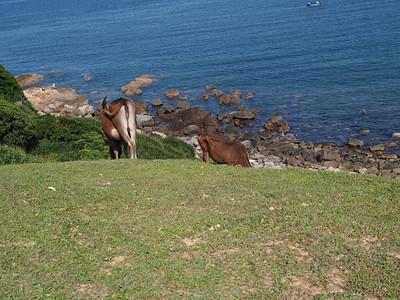 Grass Island 塔門 2014/05
