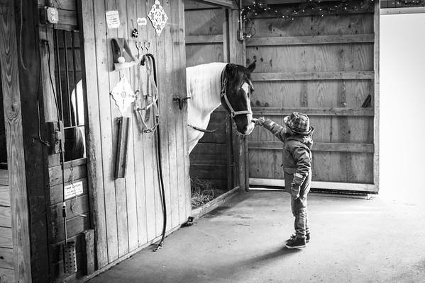 Sewickley | Horses