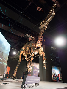 dinosaur exhibit, Minnesota Science Museum