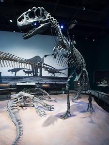 dinosaur exhibit, Minnesota Science Museum