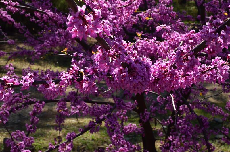 2015-04-04-BeaverBend-DuaneBirthday-Easter20150404232