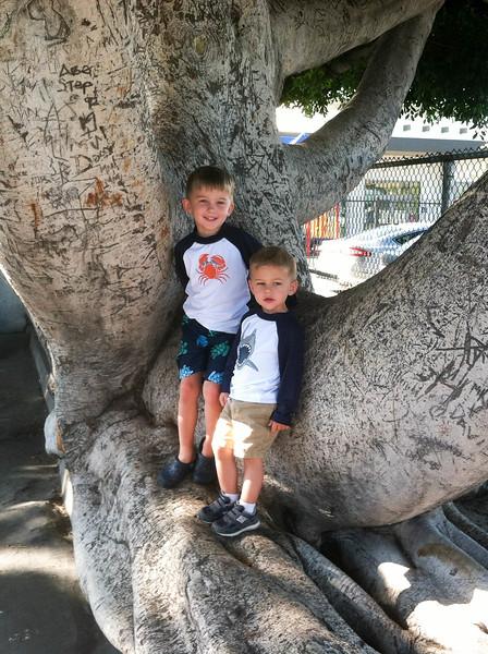 20150829-20150829_boys_in_tree
