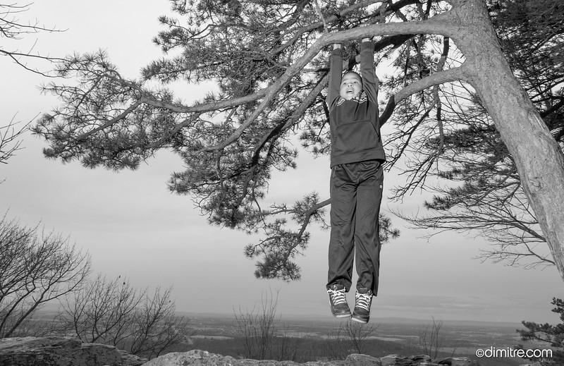 Hanging Trev 713