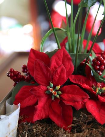 2015 Christmas 5