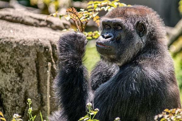 2015 Cincinnati Zoo
