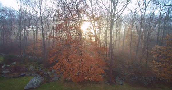 Pound Ridge in the Fog