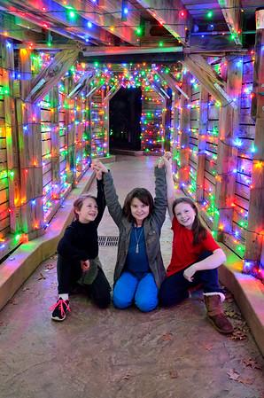 Lewis Ginter Christmas Lights