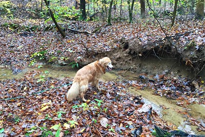 Fox Creek trail