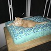 Kitty checking out his new bed.