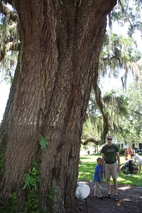...of this huge live oak tree.